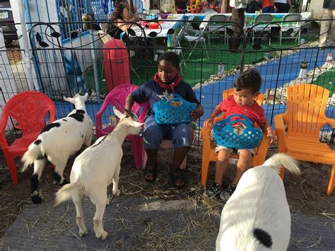 fort lauderdale petting zoo party rental