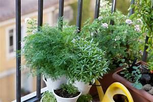 Balkon Bäume Im Topf : dill auf dem balkon anbauen so gedeiht er am besten ~ Frokenaadalensverden.com Haus und Dekorationen