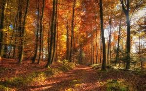 nature, , trees, , autumn, , forest, wallpapers, hd, , , , desktop, and