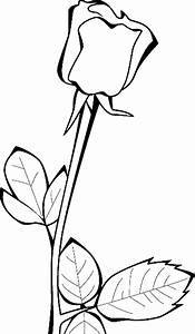 Rose Coloring Pages - coloringsuite.com