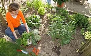Pflanzen Für Gute Raumluft : kr uter pflanzen 7 tipps f r gute ernten mein sch ner ~ A.2002-acura-tl-radio.info Haus und Dekorationen