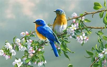 Birds Flowers Wallpapers