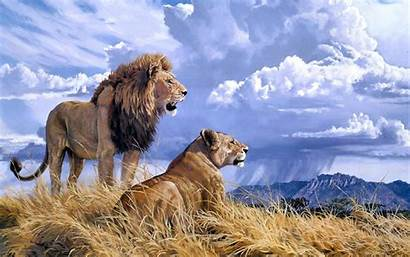 Lion Lions Lioness Wallpapers Animals Quotes Mountains