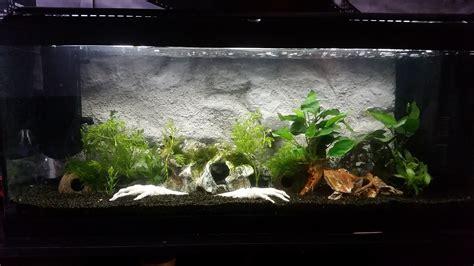 comment nettoyer les decors d aquarium fabrication d un fond en relief imitant une paroi rocheuse