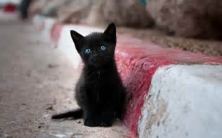 black cats with blue the 10 list