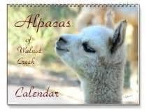alpaca calendars