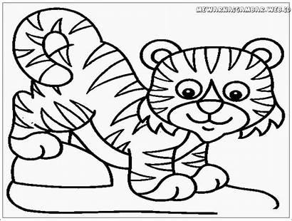 Tiger Coloring Mewarnai Tigers Harimau Gambar Clemson