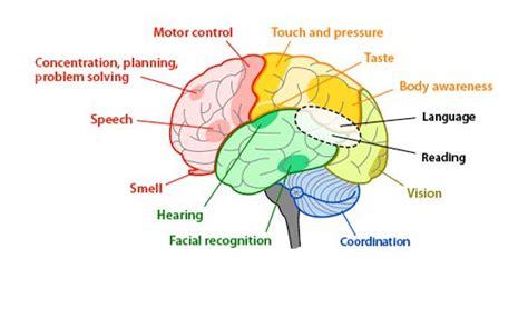 part   brain controls coordination  balance