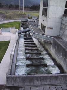10 Fish Ladder For Returning Adult Salmon And Steelhead At