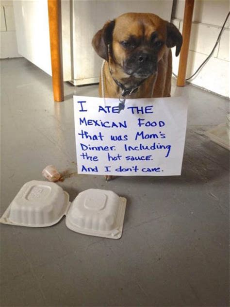 funniest animal shaming pictures   month  pics