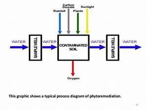 Phytoremediation Ppt