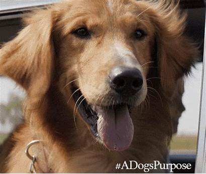 Purpose Dog Dogs Giphy Puppies Movies Gifs