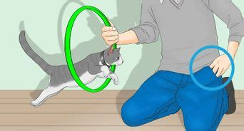 teach  cat   tricks  steps  pictures
