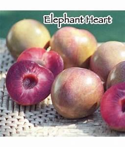 Elephant Heart Size