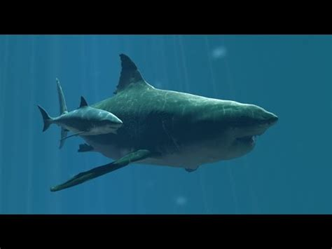 real megalodon proof  evidence  youtube