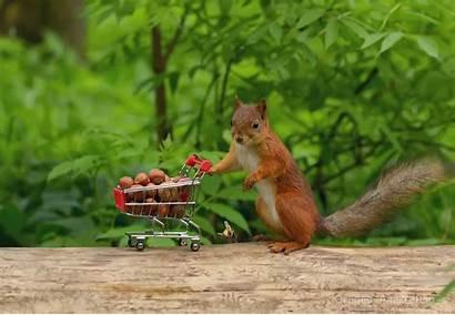 Squirrel Funny Humor Desktop Wallpapers Background śmieszne