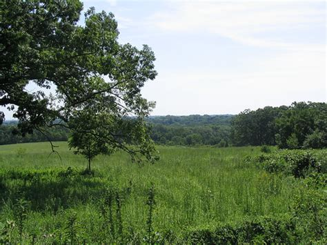 savanna oak wisconsin oak savanna prairie flickr photo sharing
