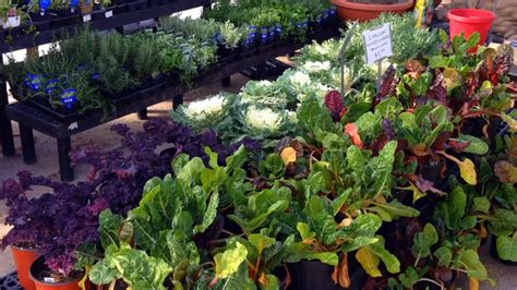 How To Start An Organic Vegetable Garden In Your Backyard by How To A Free Organic Vegetable Garden