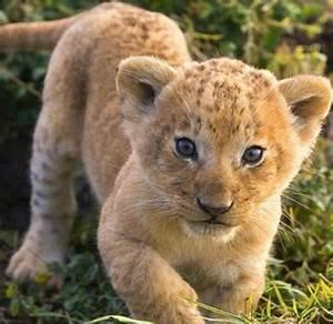 Las fotos de animales bellos para imprimir de verdad