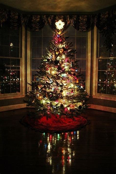 Night Christmas Tree Pictures, Photos, and Images for