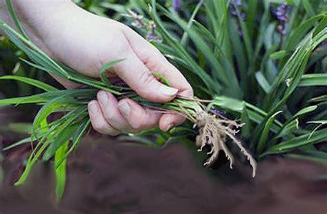 Come eliminare le erbe infestanti Idee Green