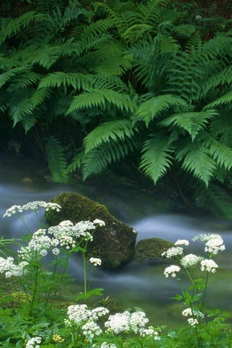 Wallpaperscataloguecom  Fern And River In 640x960