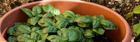 vasi per orto in terrazzo come scegliere i vasi per un orto sul terrazzo sementi dotto