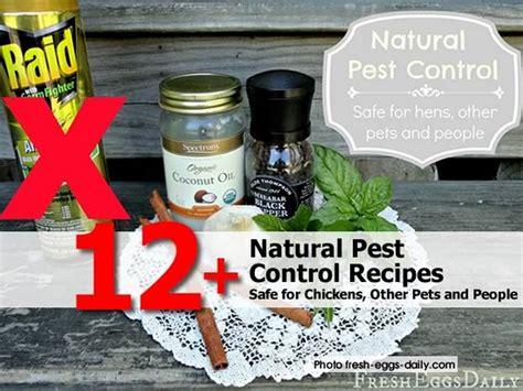 12+ Natural Pest Control Recipes  Safe For Chickens