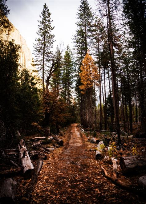 Free Images : landscape tree nature forest path rock