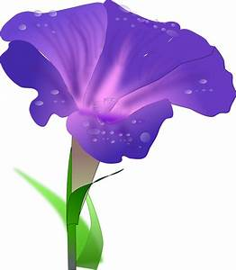 Purple morning glory,dewdrop,flower vector Free PSD