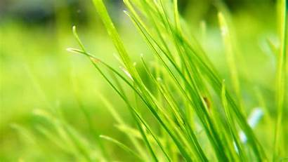 Plant Background Plants Backgrounds Wallpapers Seagrass Hipwallpaper