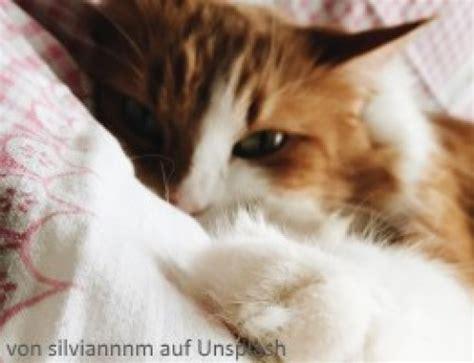 mammatumor gesaeugetumor bei der katze symptome