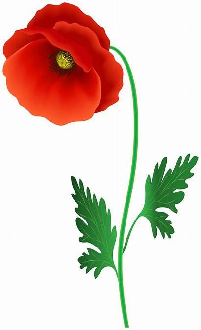 Poppy Clipart Flower Flowers Transparent Clip Yopriceville
