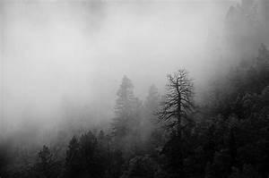 black and white, nature, photo, photography - image ...