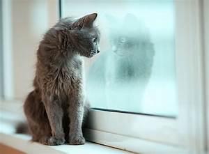 Katzen In Mietwohnung 2016 : katzenhaltung in der mietwohnung zooroyal magazin ~ Lizthompson.info Haus und Dekorationen