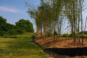 Barrière Anti Rhizome Castorama : barri re anti rhizome blog jardin couvert conseils ~ Dailycaller-alerts.com Idées de Décoration
