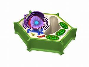 3d Model Biology Plant Cell