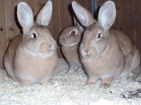 Le Für Draußen by Tiervermittlung Tierheimdetails