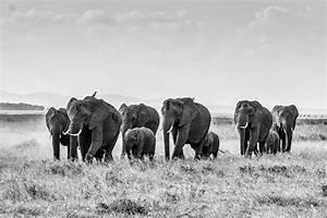 Remember Elephant Refuge Founder – ForceChange