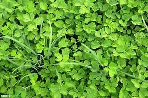 Gemüse Pflanzen Was Passt Zusammen : mischkultur im garten diese gem sesorte und kr uter ~ Lizthompson.info Haus und Dekorationen