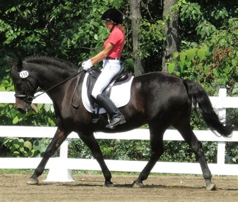 Correct Your Leg Position for Clearer Aids - Dressage Today