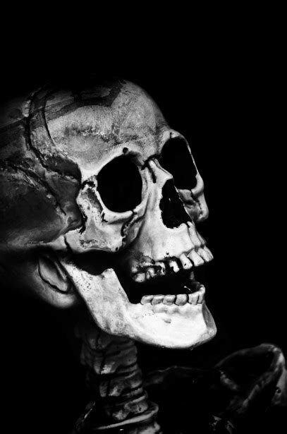 skull  stock photo public domain pictures
