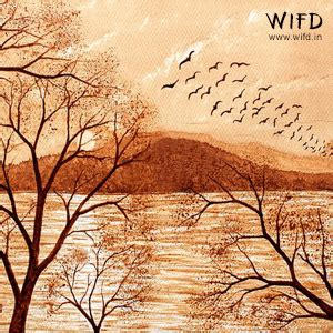 Moon through the branches coffee painting for beginners. Learn the art of Coffee painting starting from the right basics