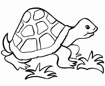 Easy Coloring Pages Turtle Simple Printable Templates