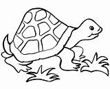 Easy Coloring Pages Turtle Simple Printable Cute Templates Getcoloringpages Template sketch template