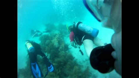 scuba diving looe key reef  florida keys youtube