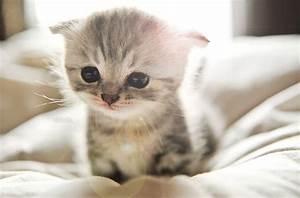 Kitty World: Cute Tabby Kitten