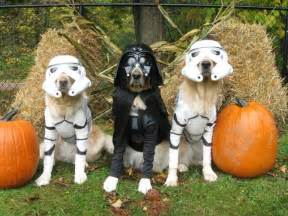 Happy Halloween Pet Safety