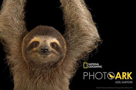 Exhibit To Feature Sartore's National Geographic Photos