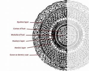 Hair Electrolysis Diagram, Hair, Get Free Image About ...